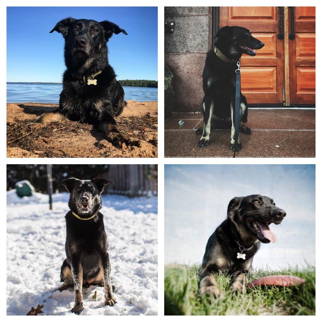 four images of dogs beach door snow sky