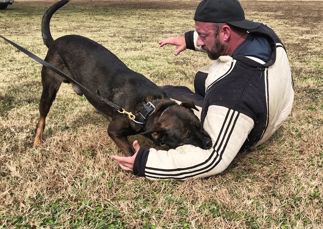 mike ritland being attacked by protection dog