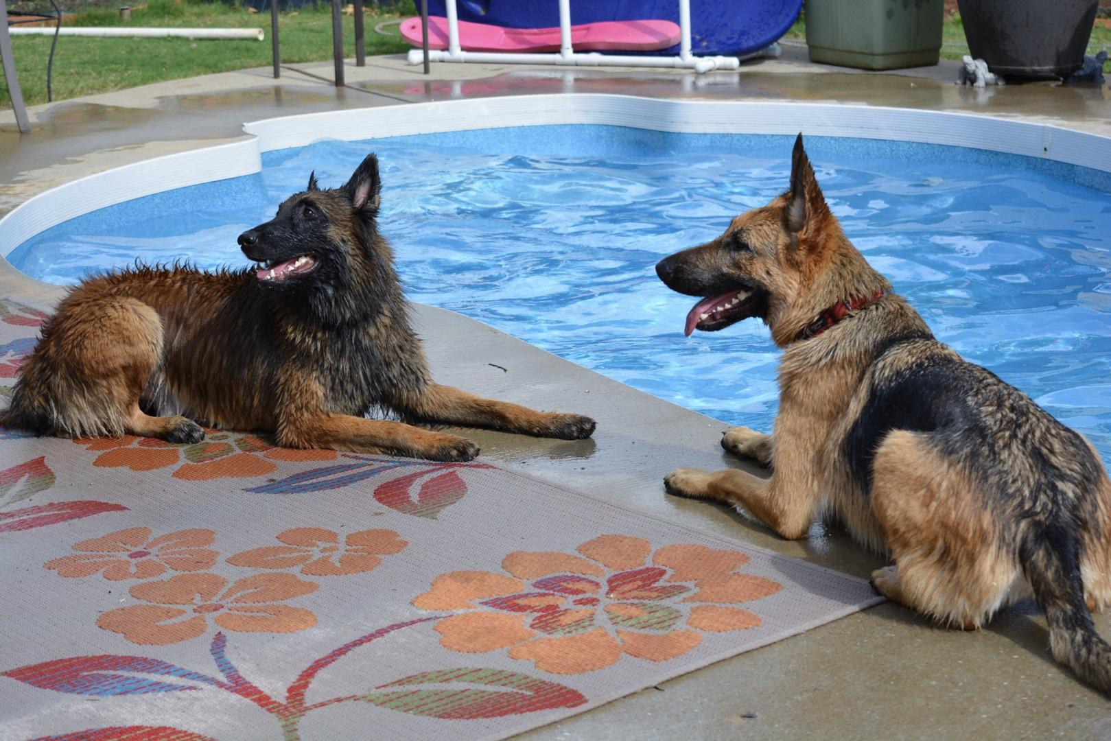 two dogs sitting in front of pool mike ritland